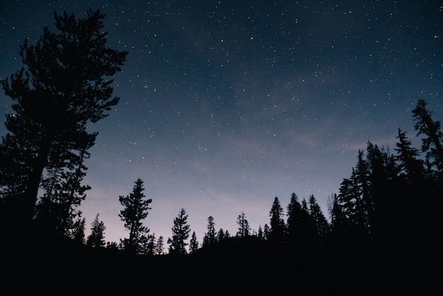 Las I Rozgwieżdżone Niebo W Nocy Darmowe Zdjęcia
