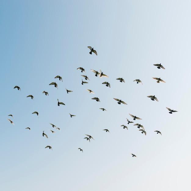 Latające Ptaki Na Niebie Premium Zdjęcia