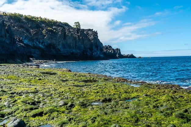 Latem Zielona Roślinność Morska Nad Morzem Na Plaży Charco Verde Na Wyspie La Palma. Wyspy Kanaryjskie Hiszpania Premium Zdjęcia