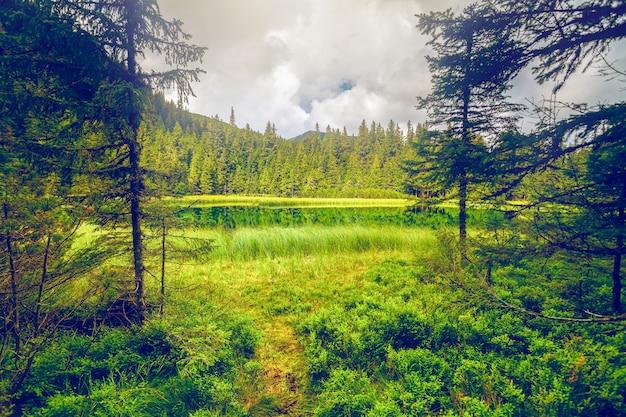 Leśne Górskie Jezioro Forrest Premium Zdjęcia
