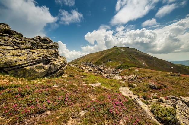 Letni Krajobraz Z Kwitnącymi Kwiatami W Górach Premium Zdjęcia