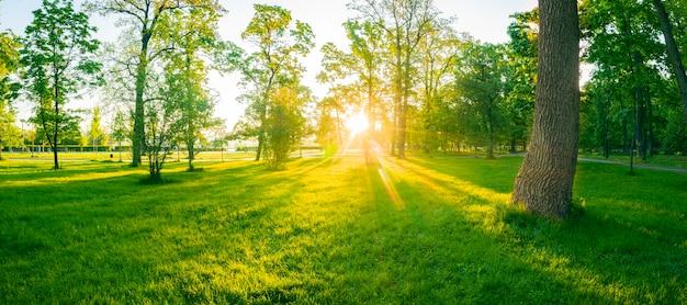 Letni Magiczny Jasny Poranek W Zielonym Parku. Młoda Bujna Trawa I Ciepłe Promienie Słońca Tworzą Cudowną Atmosferę. Premium Zdjęcia