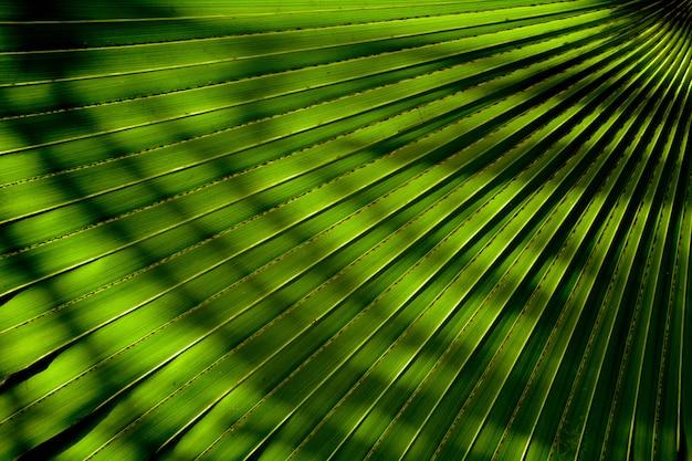 Linie I Tekstury Zielonych Liści Palmowych Z Cieniem Premium Zdjęcia