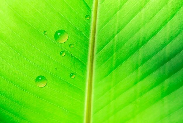 Liść bananowca tekstury z kropli wody Darmowe Zdjęcia