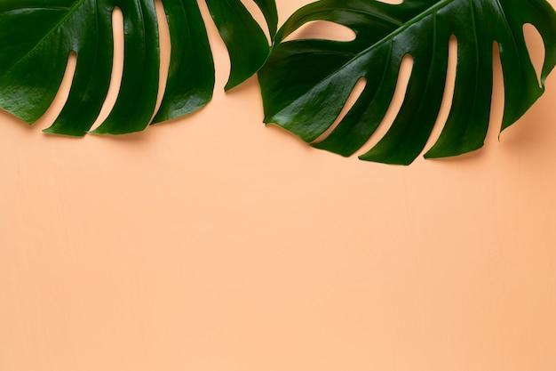 Liść Monstera Na Kolorowym Tle. Liść Palmowy, Prawdziwa Roślina Szwajcarskiego Sera Z Tropikalnej Dżungli. Widok Płaski I Górny. Premium Zdjęcia