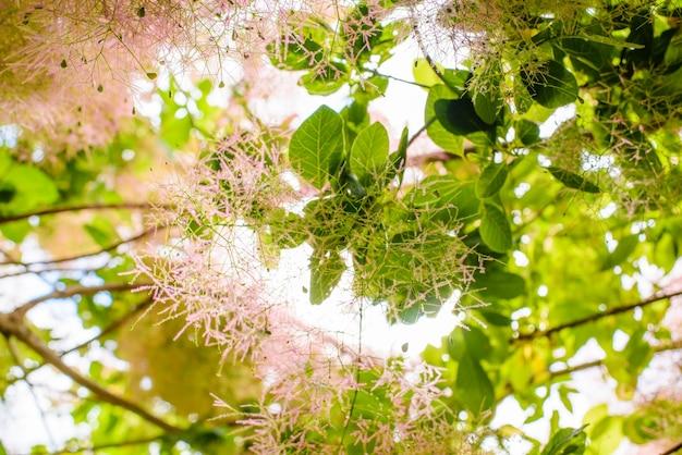 Liście Eukaliptusa I Kwiaty W Australii Darmowe Zdjęcia