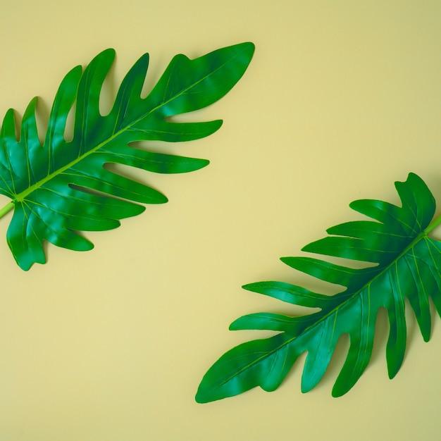 Liście Palmowe Na żółtym Tle, Drzewo Tropikalne. Premium Zdjęcia