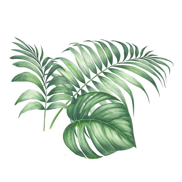 Liście palmowe zwrotnika. Premium Zdjęcia