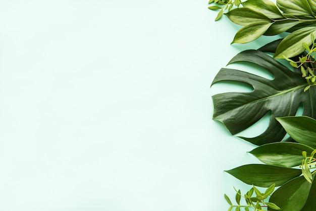 Liście tropikalne i liść monstera Premium Zdjęcia
