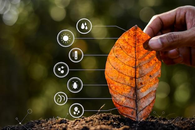 Liście W Rękach Ludzi I Ikona Technologii O Degradacji Do Gleby. Premium Zdjęcia
