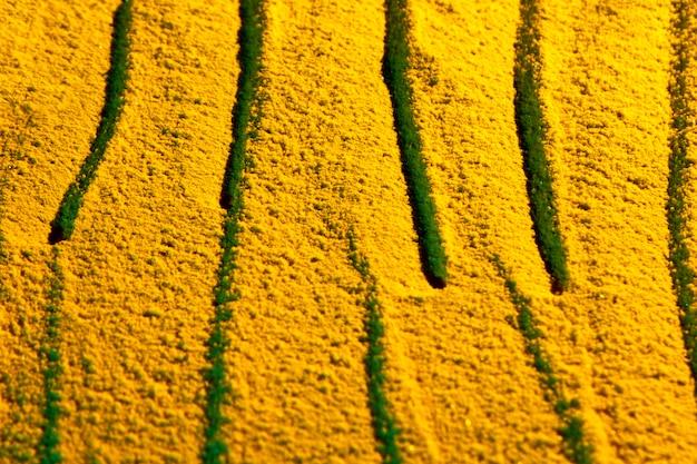 Losowo Rysowane Linie Na żółtym Piasku Darmowe Zdjęcia