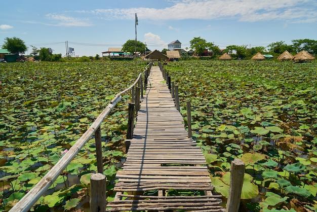 Lotus Plantation Darmowe Zdjęcia
