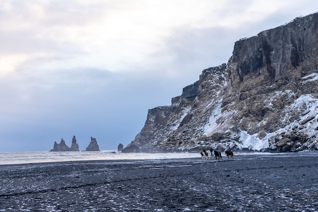 Ludzie Jeżdżą Konno Na Czarnej Plaży Vik I Podziwiają Fale Zimowego Atlantyku Premium Zdjęcia