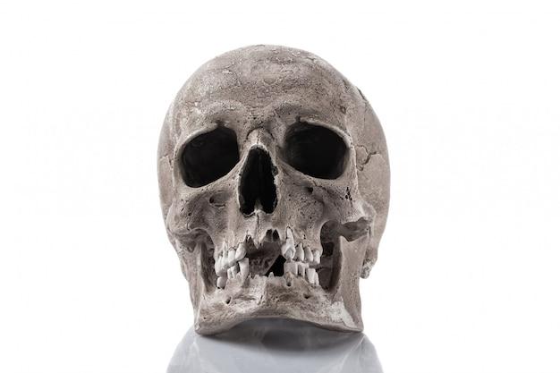 Ludzka czaszka odizolowywająca na bielu Premium Zdjęcia