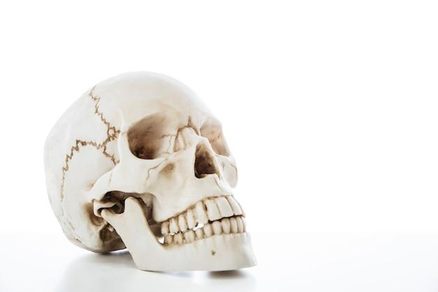 Ludzki Szkielet Czaszki Do Izolacji Edukacji Anatomii Medycznej Na Białym Tle Ze ścieżką Przycinającą. Premium Zdjęcia