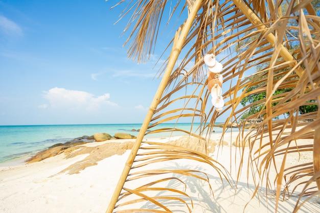 Łuk liścia kokosowego na plaży, czas wolny na wakacje Premium Zdjęcia