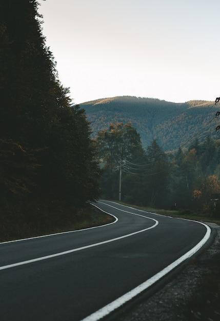 Magiczny świerkowy Las Z Mgłą. Wieczne I żółte Drzewa. Droga Przez Góry I Płynącą Wodę Z Górskich Rzek Premium Zdjęcia