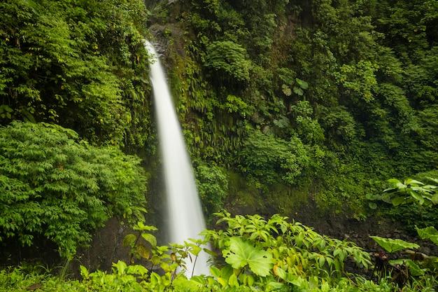 Majestatyczny wodospad w lasach tropikalnych kostaryki Darmowe Zdjęcia