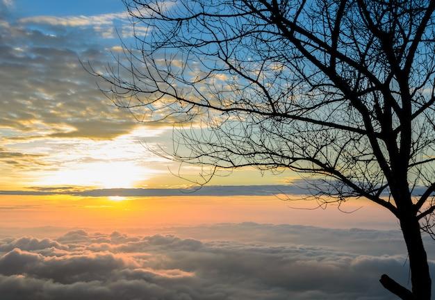 Majestatyczny Wschód Słońca Z Morzem Mgły Premium Zdjęcia