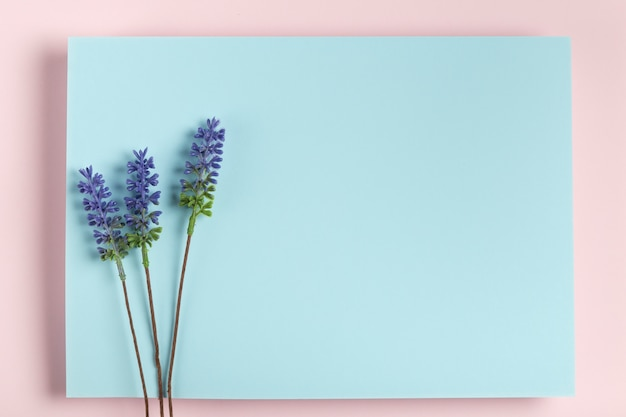 Makieta lawendy na niebieskim prostokącie Darmowe Zdjęcia