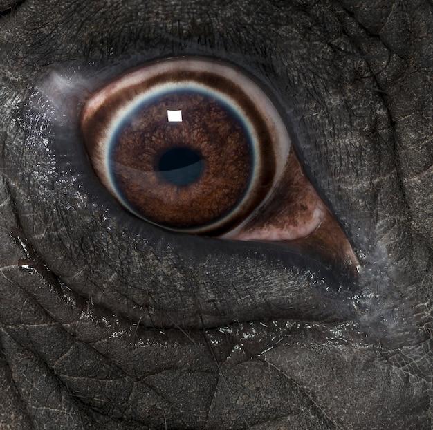 Makro Słonia Afrykańskiego Premium Zdjęcia