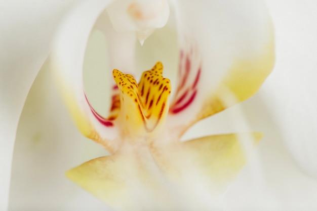 Makro Strzał Z Rdzenia Kwiatu Darmowe Zdjęcia
