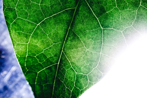 Makro Zielony Liść Darmowe Zdjęcia