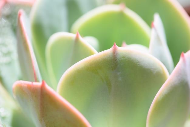 Makro Zielony Soczyste Rośliny Darmowe Zdjęcia