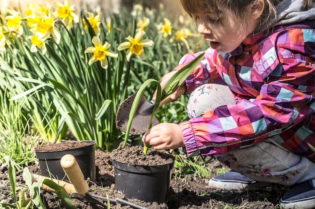 Mała Dziewczynka Sadzi Kwiaty W Ogrodzie, Dzień Ziemi. Dziecko Pomaga W Gospodarstwie. Darmowe Zdjęcia