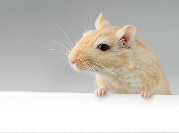 Mała myszka trzyma biały sztandar Premium Zdjęcia