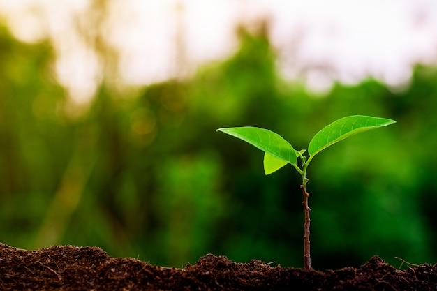 Mała roślina rośnie rano. Premium Zdjęcia