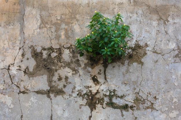 Mała Roślina Z Małymi żółtymi Kwiatami Wyrasta Z Cementowej ściany - Ekologii I Siły Pojęcie Premium Zdjęcia