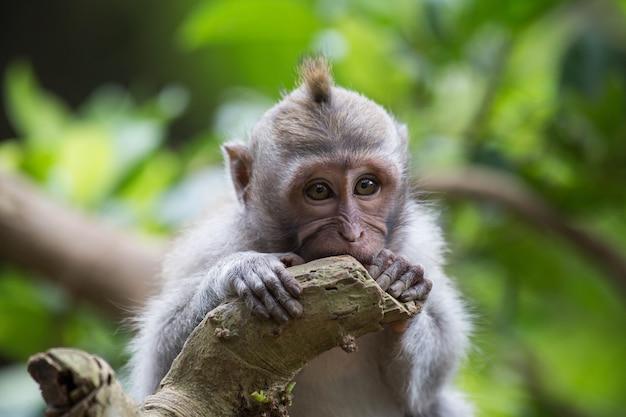 Mała śliczna I Nieśmiała Małpa W Drzewie Z Zielonymi Liśćmi W Dżungli, Przyroda Premium Zdjęcia