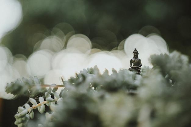 Mała Statua Buddy W środku Planu Kaktusów W Ogrodzie Darmowe Zdjęcia