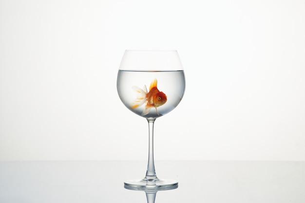 Mała złota rybka porusza się w lampce wody Premium Zdjęcia