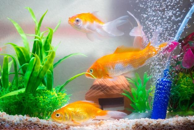 Małe Rybki W Akwarium Lub Akwarium Premium Zdjęcia