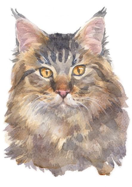 Malowanie akwarelą maine coon cat Premium Zdjęcia