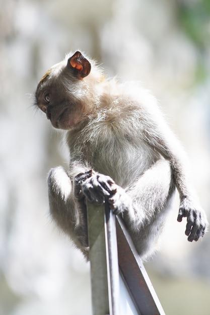 Małpa na ościeżnicy Darmowe Zdjęcia