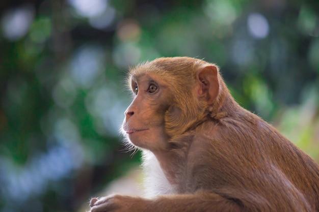 Małpa wygląda bardzo ciekawie Premium Zdjęcia