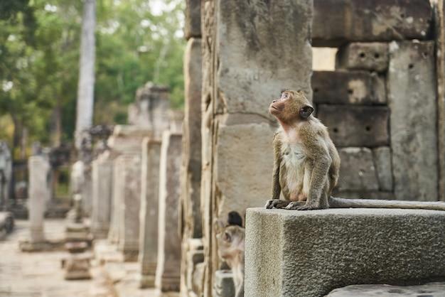 Małpa Darmowe Zdjęcia