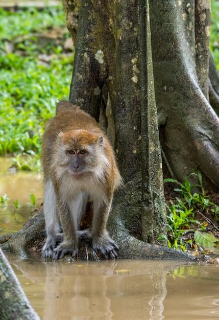 Małpi Obsiadanie Na Korzeniach Drzewa Premium Zdjęcia