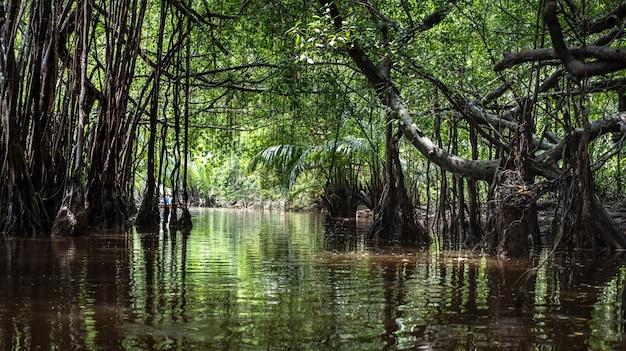 Mały Amazon W Pang-nga W Sang Nae Canal Thailand Premium Zdjęcia