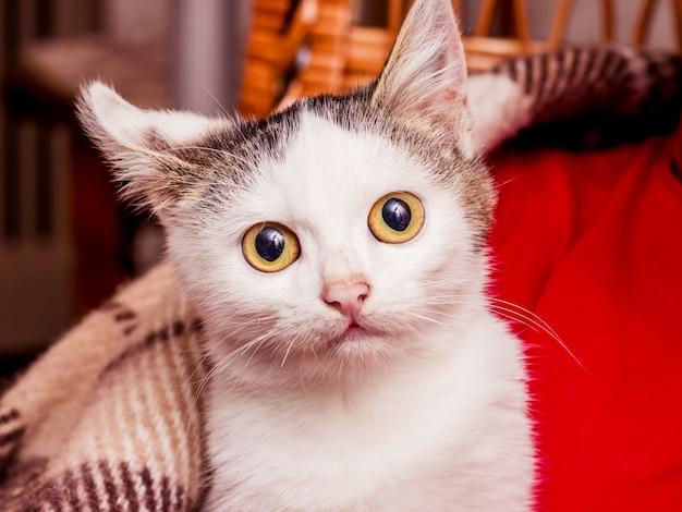 Mały Biały Kotek O Dużych Oczach Jest Ogrzewany Pod Kratką Premium Zdjęcia