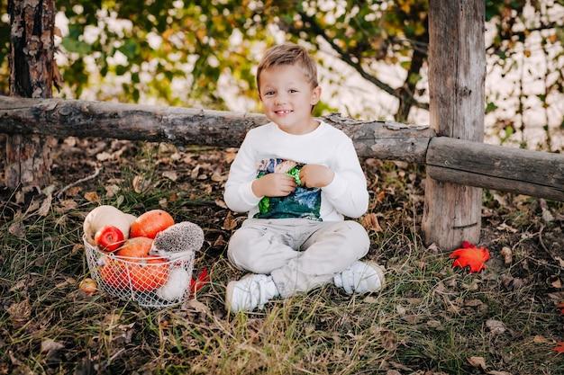 Mały Chłopiec Siedzi Na Jesiennej Trawie Obok Kosza Z Dyniami I Małego Jeża Premium Zdjęcia