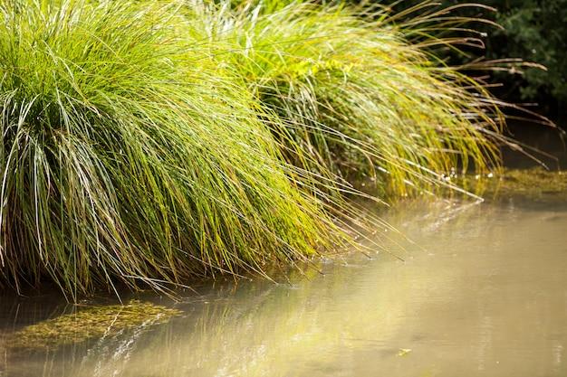 Mały Dziki Potok Z Jego Zieloną Roślinnością Premium Zdjęcia
