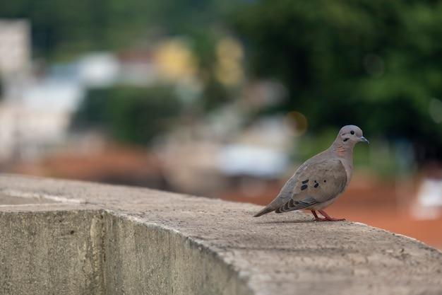 Mały Gołąbek Siedzący Na Półce Na Szczycie Budynku. Premium Zdjęcia