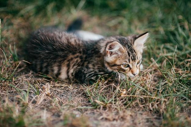 Mały Kotek Leżący W Trawie Premium Zdjęcia