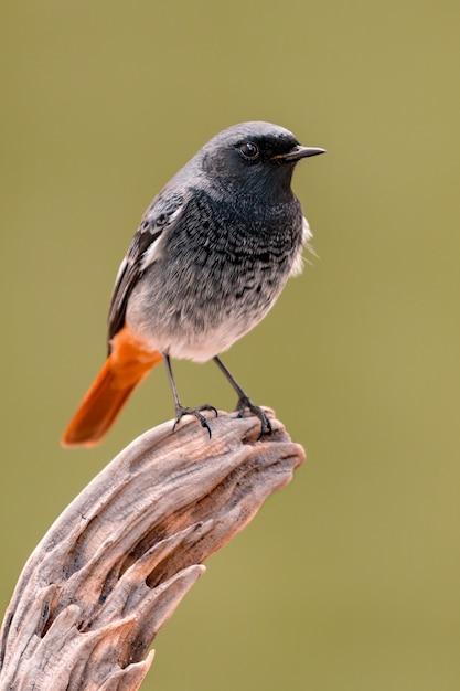 Mały Ptak Na Bagażniku Premium Zdjęcia