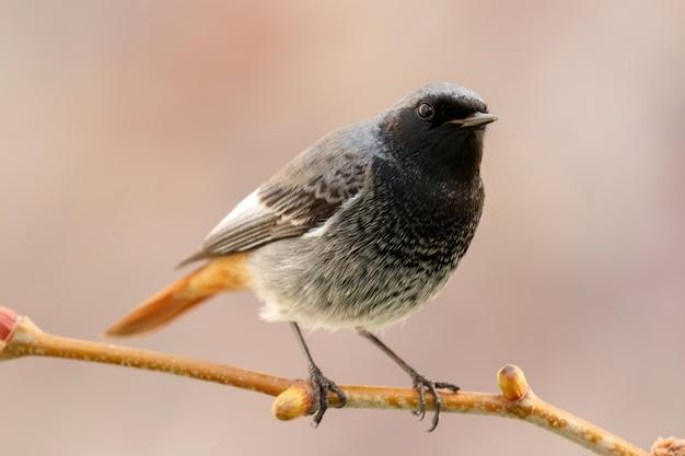 Mały Ptak Na Gałęzi Premium Zdjęcia