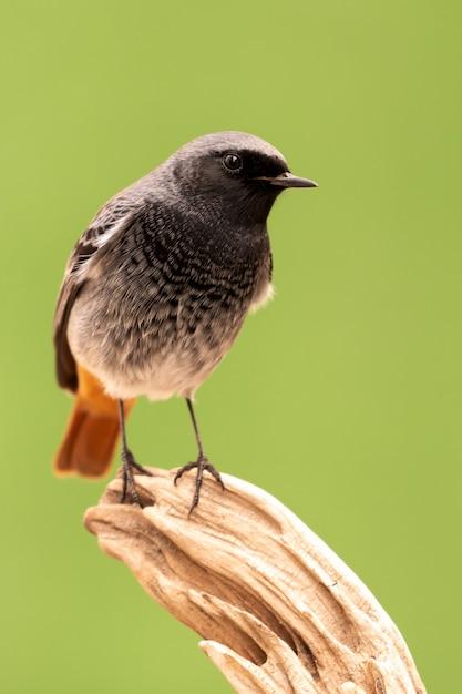 Mały Ptak Na Pniu Premium Zdjęcia